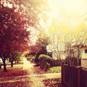 leaf-lined street